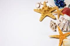 Escudos e starfish imagens de stock