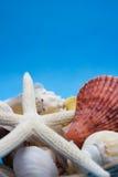 Escudos e starfish do mar fotografia de stock royalty free