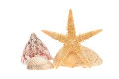 Escudos e starfish do mar isolados no branco Fotos de Stock Royalty Free