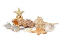 Escudos e starfishes Imagens de Stock Royalty Free
