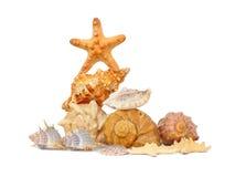 Escudos e starfishes no branco Fotos de Stock Royalty Free