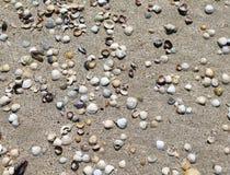 Escudos em Sandy Beach, fundo das conchas do mar foto de stock