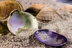 Escudos em uma praia Fotos de Stock Royalty Free
