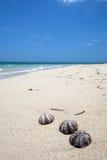 Escudos em uma praia tropical maravilhosa Imagens de Stock Royalty Free