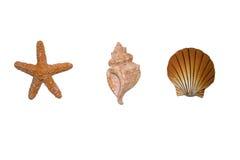 Escudos isolados Imagens de Stock