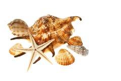 Escudos marinhos Imagem de Stock