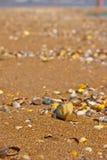 Escudos na areia Imagens de Stock