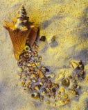 Escudos na areia imagem de stock royalty free
