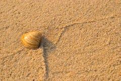 Escudos na areia Fotos de Stock Royalty Free