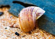 Escudos na areia Imagem de Stock