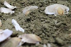 Escudos na areia Fotografia de Stock Royalty Free