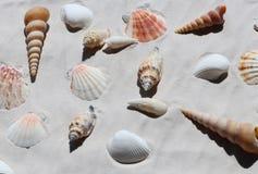 Escudos na areia branca, vista superior imagem de stock