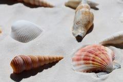Escudos na areia branca, vista superior imagem de stock royalty free