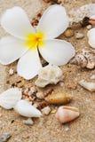 Escudos na areia da praia Fotos de Stock