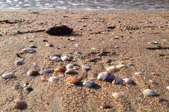 Escudos na costa de mar imagem de stock