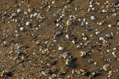 Escudos na praia imagem de stock royalty free