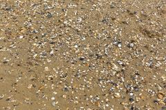 Escudos na praia fotos de stock royalty free