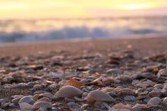 Escudos na praia Imagens de Stock Royalty Free