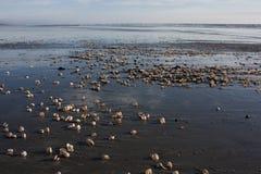Escudos na praia Fotografia de Stock Royalty Free