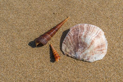 Escudos na praia fotos de stock