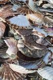 Escudos na praia imagem de stock