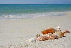 Escudos na praia arenosa Imagens de Stock