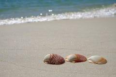 Escudos na praia arenosa Foto de Stock