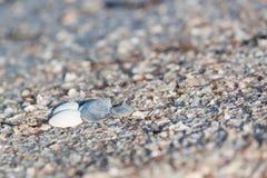 Escudos na praia Fundo fotografia de stock royalty free