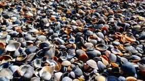 Escudos na praia no Mar Negro imagens de stock