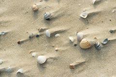 Escudos na praia ventosa Fotografia de Stock Royalty Free