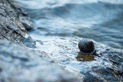 Escudos nas rochas no mar fotos de stock