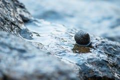 Escudos nas rochas no mar imagem de stock royalty free
