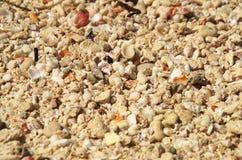 Escudos pequenos dispersados por todo o lado em uma praia tropical fotografia de stock royalty free