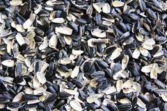 Escudos vazios da semente do girassol fotografia de stock