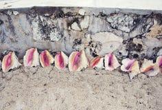 Escudos vazios do búzio perto de uma praia foto de stock