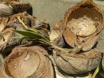 Escudos vazios do coco com palma nova foto de stock royalty free