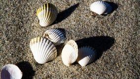 Escudos vazios do mexilhão na praia fotos de stock royalty free