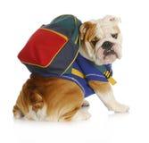 Escuela de la obediencia del perro Fotografía de archivo libre de regalías