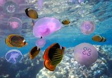 Escuela de las medusas de la luna Imagenes de archivo