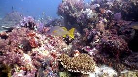 Escuela de los pescados brillantes subacuáticos en fondo del fondo del mar asombroso en Maldivas almacen de metraje de vídeo