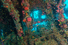 Escuela de los pescados de cristal dentro del naufragio imagen de archivo libre de regalías