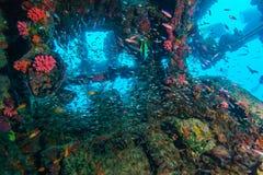 Escuela de los pescados de cristal dentro del naufragio imágenes de archivo libres de regalías