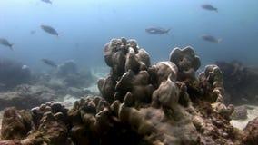 Escuela de los pescados subacuáticos en las Islas Galápagos almacen de metraje de vídeo