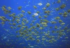 Escuela de pescados Imágenes de archivo libres de regalías