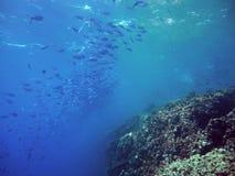 Escuela de pescados más fusilier al borde del filón metrajes