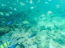 Escuela de pescados tropicales Foto de archivo