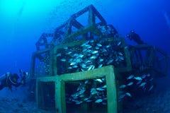 Escuela de pescados y del filón cubicado artificial en Chumporn, Tailandia imagen de archivo