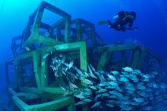 Escuela de pescados y del filón cubicado artificial en Chumporn, Tailandia fotografía de archivo