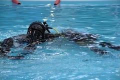 Escuela del equipo de submarinismo Foto de archivo libre de regalías