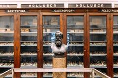 Escultura antigua de Ferdinand Stoliczka: Paleontólogo Geological Survey del lugar y del objeto expuesto de la India dentro del  fotos de archivo libres de regalías